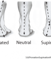Biomechanical Lower Limb Injuries