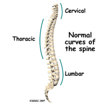 thoracic-spine