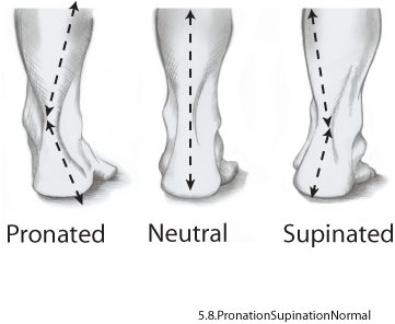 pronated-neutral-supinated